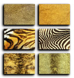 Collection of wild animals fur Stock Photos