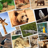 Collection of wild animals Stock Photography