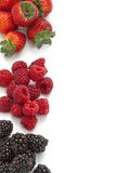 Collection of wild berries Royalty Free Stock Photo