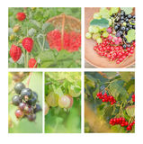 Collection of wild berries. Collage of fresh berries Stock Photos