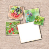 Collection of wild berries. Collage of fresh berries Royalty Free Stock Photography