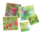 Collection of wild berries. Collage of fresh berries Royalty Free Stock Images