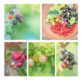Collection of wild berries. Collage of fresh berries Stock Images