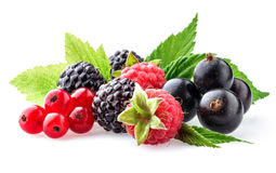 Collection of wild berries on white Stock Photography
