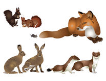 Collection of wild mammals. Stock Image