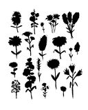 Collection of wildflowers, sketch fro your design Stock Photo