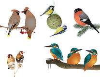 Collection of winter birds Royalty Free Stock Photo
