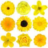Collection of Yellow Flowers Isolated. On White. Various set of Dahlia, Dandelion, Daisy, Gerber, Sunflower, Marigold Flowers royalty free stock image