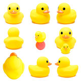 Collection of yellow rubber duck, Royalty Free Stock Photo