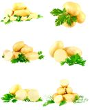 Collection of young potatoes, parsley . Isolated Stock Image