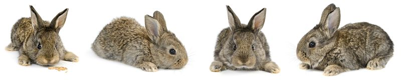 Collection young rabbit with different camera angles isolated on stock image
