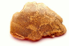 Korallenrot cabochon Stockfotografie