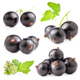 Collections of Black currant Royalty Free Stock Photos