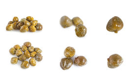 Collections of capers  isolated Royalty Free Stock Photo