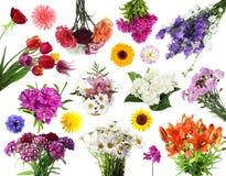 Collections de fleurs d'été Images libres de droits