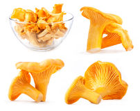 Collections of Edible wild mushroom chanterelle. (Cantharellus cibarius) in tray  on white background Stock Photos