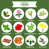 Collections of herb set 3, food vector illustration, flat icon Stock Image