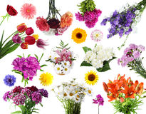 Collections of summer flowers Royalty Free Stock Images