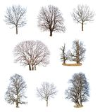 Collections of tree Stock Images