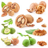 Collections of Walnuts Stock Photos