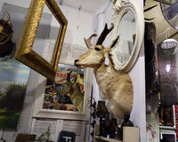 Collector's item. Junk shop interior: mounted antelope head on the wall of a rummage sale / antiques store Royalty Free Stock Photos