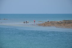 Collectors of shells and mussels. People collecting shells and mussels on the shore of the ocean stock photography