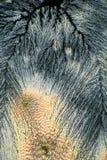 Colleen Fitzpatrick cristallizzato Fotografie Stock Libere da Diritti