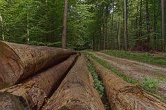 Collega la foresta Fotografie Stock