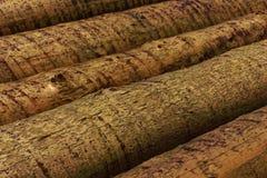 Collega la foresta Fotografia Stock Libera da Diritti