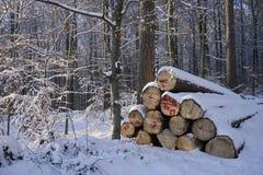 Collega la foresta dell'inverno Immagine Stock Libera da Diritti