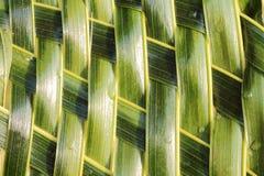 Collegamento di zigzag del tessuto delle foglie della noce di cocco Immagini Stock Libere da Diritti