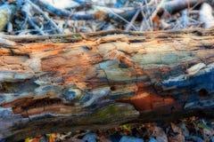 Collegamento marcio la terra con un processo di HDR fotografia stock