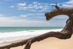 Collegamento strano la spiaggia Immagini Stock