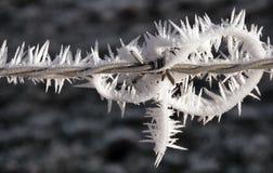 Collegare congelato della sbavatura Fotografie Stock