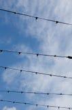 Collegare nel cielo Fotografia Stock