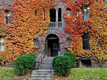 College building with fall ivy Royalty Free Stock Photo