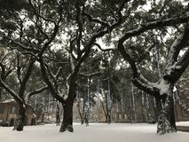 College of Charleston, Snowstorm of 2018 Royalty Free Stock Photography