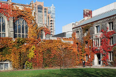College with Fall Ivy Royalty Free Stock Photo