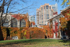College with Fall Ivy Stock Photography