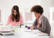 College Students Studying Together. African and Caucasian college student studying together Stock Photo