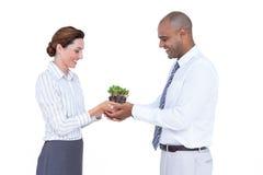 Colleghi di affari che tengono insieme pianta Fotografia Stock