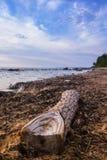 Colleghi la spiaggia Immagini Stock