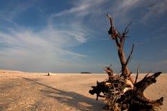 Colleghi la spiaggia Fotografie Stock Libere da Diritti