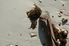 Colleghi una spiaggia fotografie stock