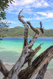 Colleghi una spiaggia con bello fondo Fotografie Stock