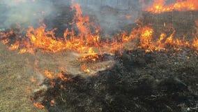 Collere del fuoco in erba lunga, priorità alta stock footage