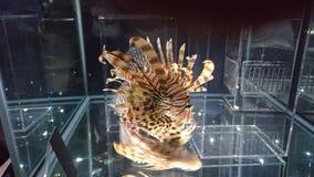 collerfull vissen Stock Foto