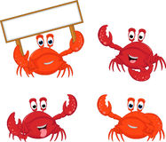 Colletion Crabs cartoon Stock Images