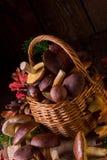 Collezioni del fungo della foresta Fotografie Stock