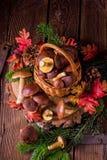 Collezioni del fungo della foresta Fotografia Stock Libera da Diritti